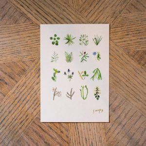 plants_card_front